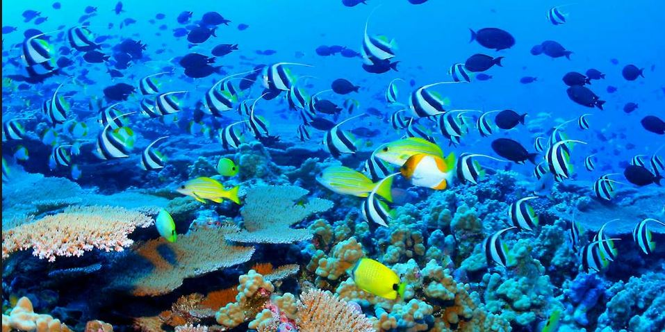 Great-Barrier-Reef-www.divetrips.jpg