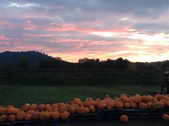 pumpkin patch sunset