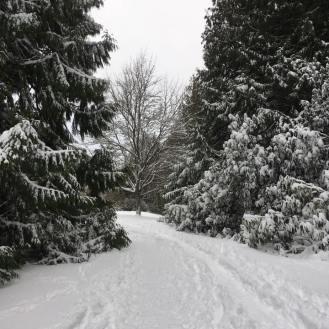 snow-path